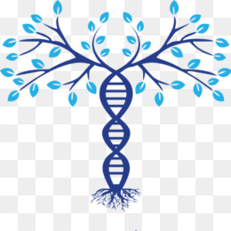 kisspng-family-tree-dna-genealogy-phylogenetic-tree-5ae45fafd6e7d6.2884111615249161438803